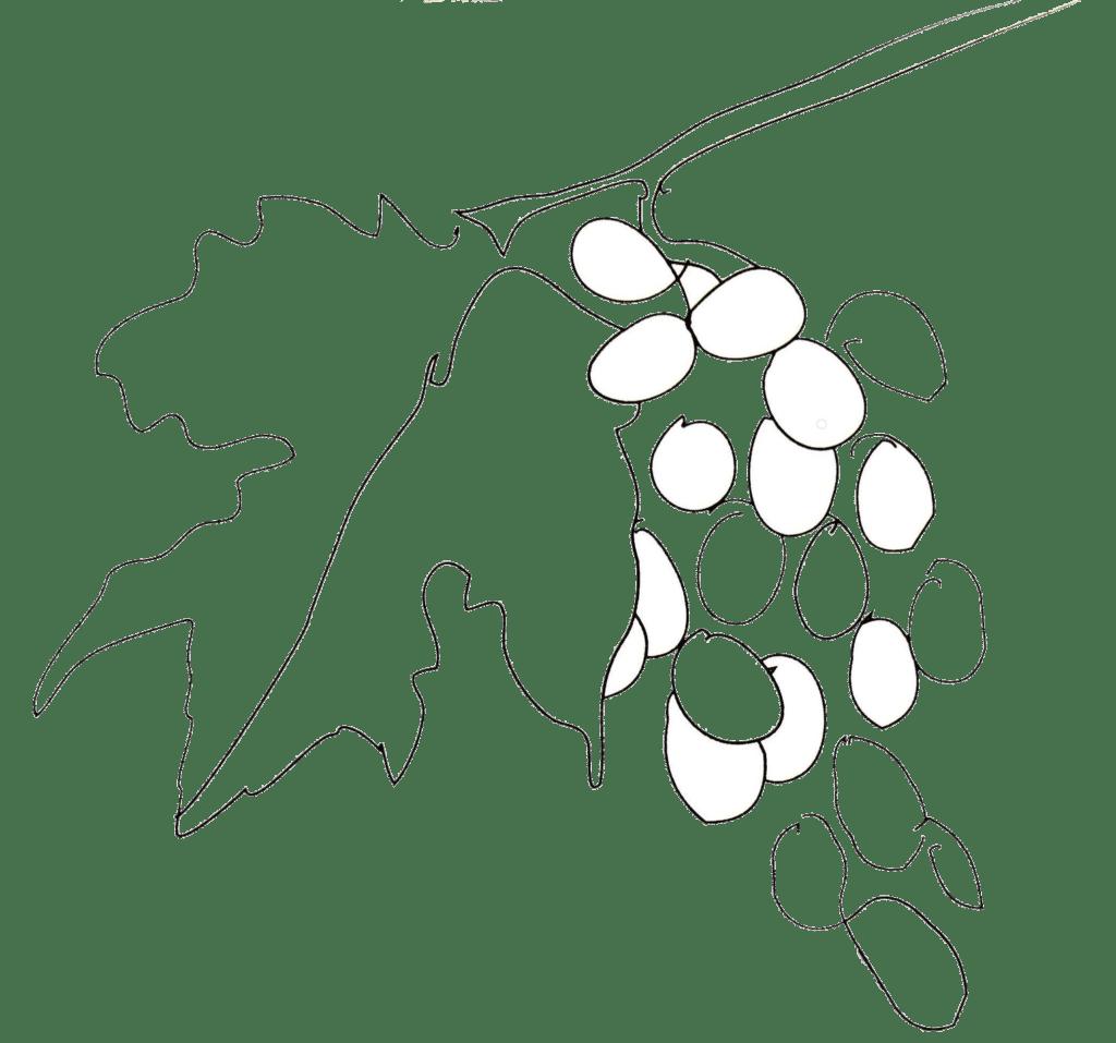 Table d'Hôtes | Pyrénées Passions - Gîtes de Charmes